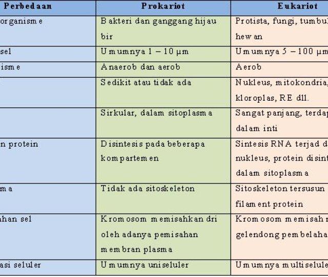 Berikut Adalah Tabel Perbedaan Sel Prokatiot Dan Eukariot Httpsaimaifantasy Files WordPress Com