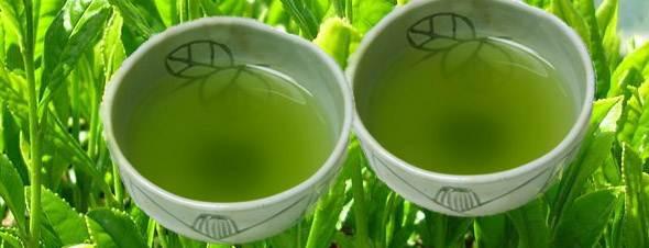 teh hijau jepang – aimai fantasy